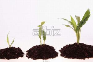Сomplex fertilizer