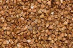 Common buckwheat