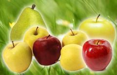 Świeże jabłka i gruszki różnych odmian