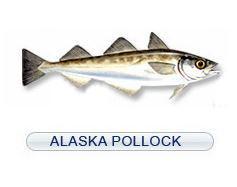 Alaska pollack