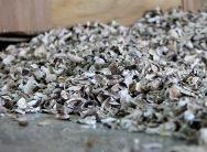 Dried mushrooms Shiitake