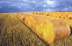 Pellets of oats husk