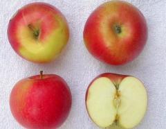 Polskie jabłka Gala i Idared