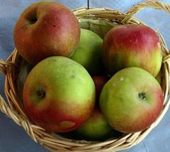 Jabłka polskie  na eksport