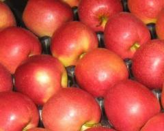 Jabłka świeże przeznaczone na eksport