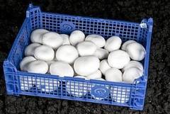 Pieczarki świeże białe powyżej 40 mm !!