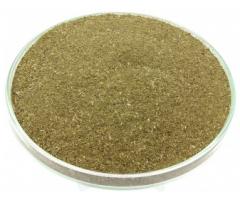 Lanceolate leaf plantain