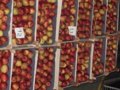 Μήλα φρέσκα