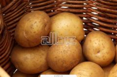 Ziemniaki różnych odmian.
