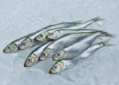 Śledź mrożony w bloku 38 kg , śledź , ryby mrożone , śledź bałtycki