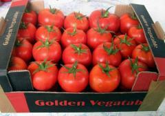 Pomidor extra
