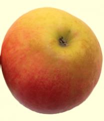 Autumnal apples