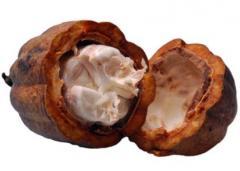 Likér, kakaový prášek, kakaové boby, kakaové