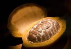 Natural cocoa powder 10% - 12%