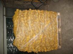 Ziemniaki jadalne z Polski