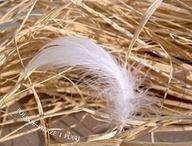 Feather and down of goose
