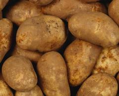Ziemniaki , warzywa handel