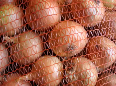 Fresh onion producer of low prices