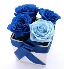 Niebieska kompozycja