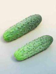 Nasiona ogórków