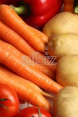 Sprzedaż świeżych warzyw.