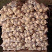 Ziemniak świeży na eksport.