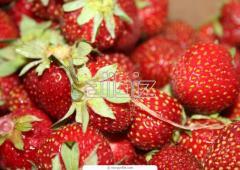Dessert strawberries