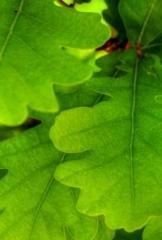 AquaVit jest nowoczesnym kondycjonerem glebowym,