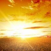 Nasiona: rzepak, kukurydza, pszenica