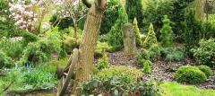 Rośliny ozdobne ogrodowe