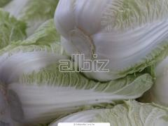 Chinese cabbage