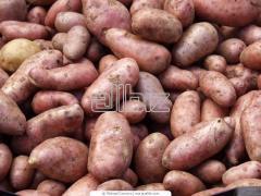 Feed potato