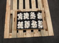 Pieczarki świeże białe klasy I 20/40 mm pakowane w