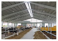 Hale przeznaczone na hodowlę zwierząt, garaże na sprzęt rolniczy i magazyny.