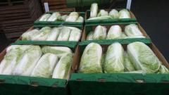Warzywa świeże, kapusta pekińska, kapusta biała