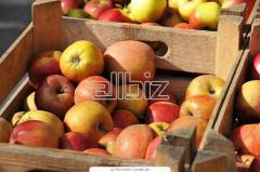 Opakowania do owoców z tektury falistej