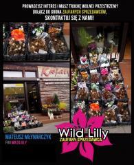 Cebulki lilii HURT/DETAL Wild Lilly