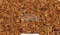 Nasiona lnu, siemię lniane, nasiona zbóż na