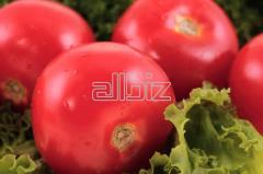 Pomidory świeże polskie, pomidor pakowany w