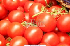 Tall tomatoes