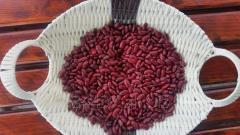 Fasola czerwona Red Kidney