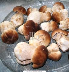 Mrożone grzyby leśne: borowiki, podgrzybki, kurki