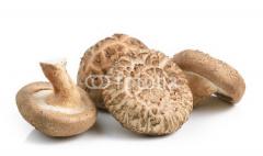 Fresh mushrooms shittake