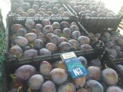 Plums in large numbers.