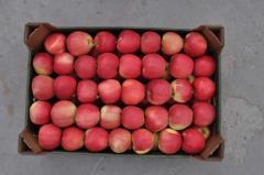 Jabłka Gala
