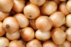 Bulb onion