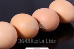 Jaja od kury zielononóżki
