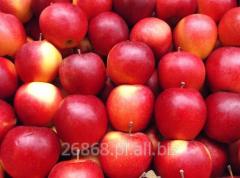 Słodkie, niewielkie jabłka, odporne na transport i