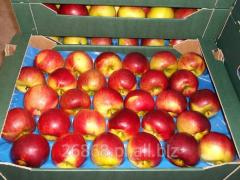 Jabłka starych i nowych odmian z chłodni
