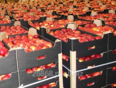 Jabłko od producenta różnych odmian.